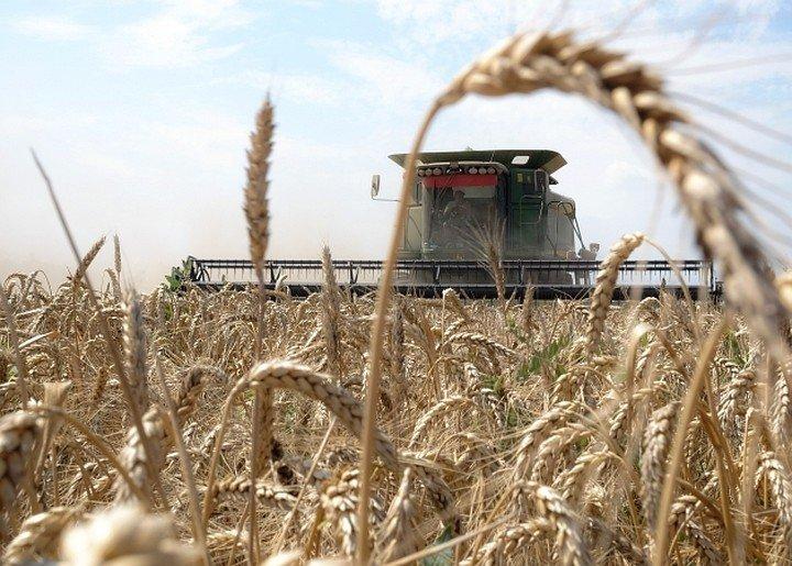 3 миллиона тонн зерна собрали волгоградские хлеборобы, фото-1